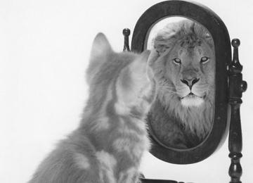 étudier votre image de marque